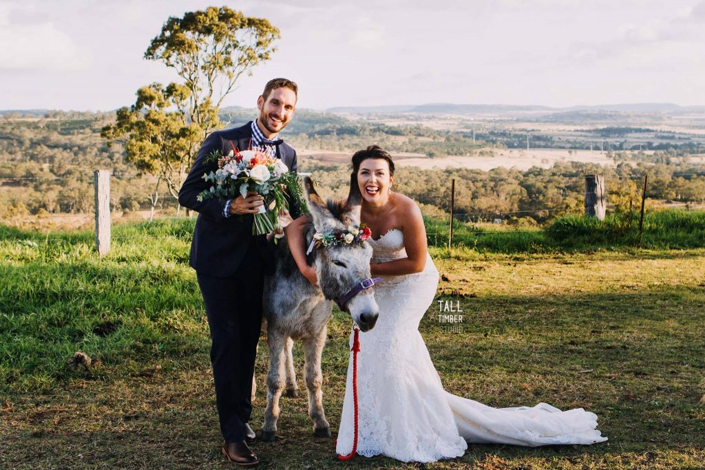 Donkey wedding photos