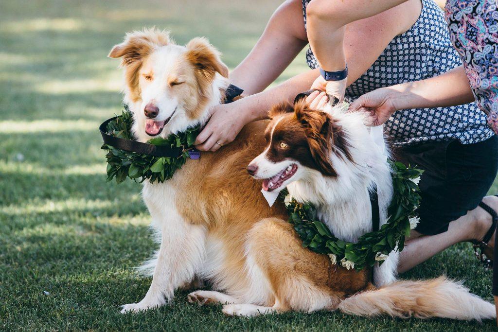 dog friendly wedding Toowoomba