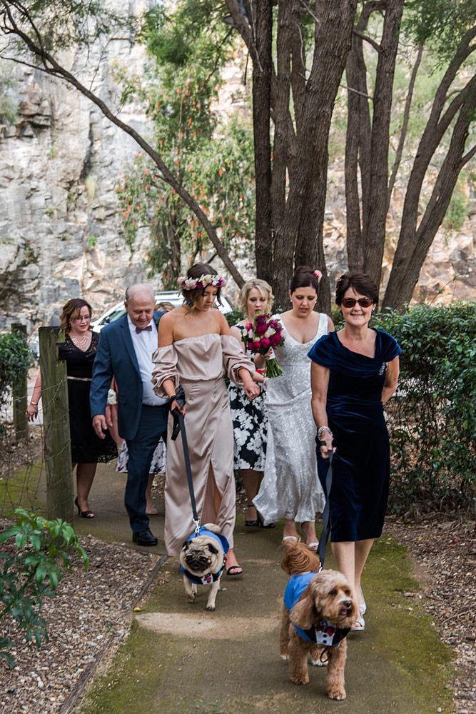 Wedding Ceremony Dogs