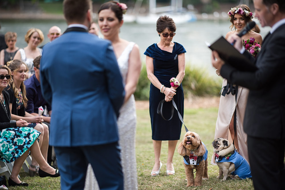 Wedding Dogs at Ceremony