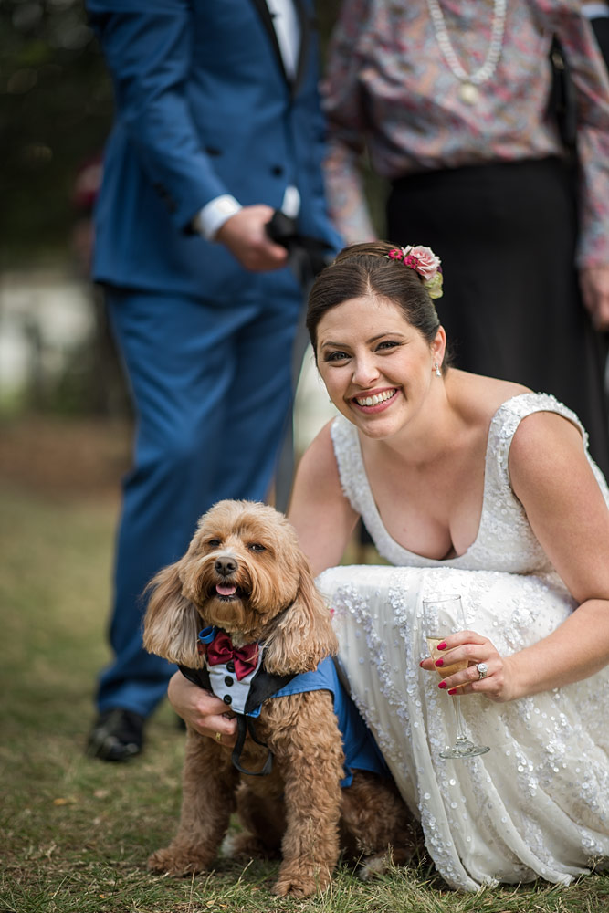 Wedding Dog tips