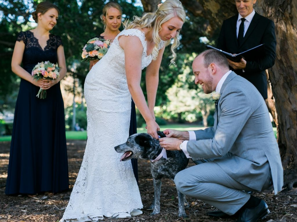 dog friendly wedding Brisbane