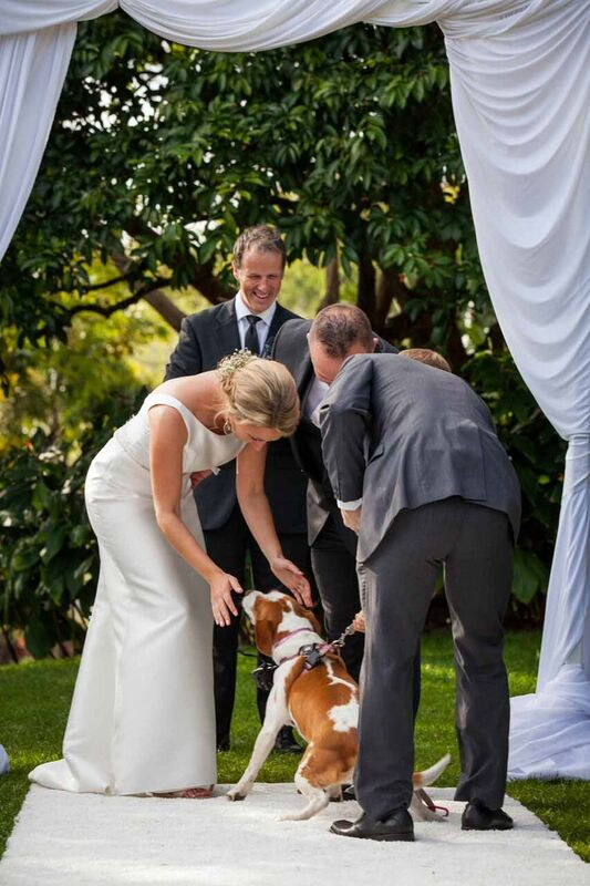 ideas for dogs at weddings