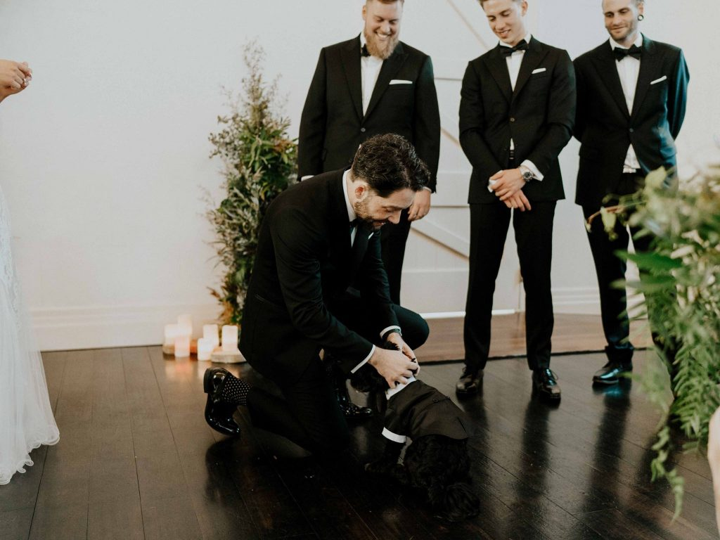wedding dog Brisbane