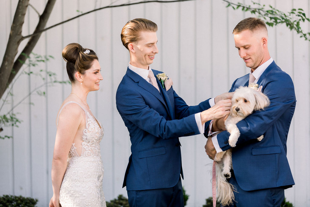 wedding dog ring bearer